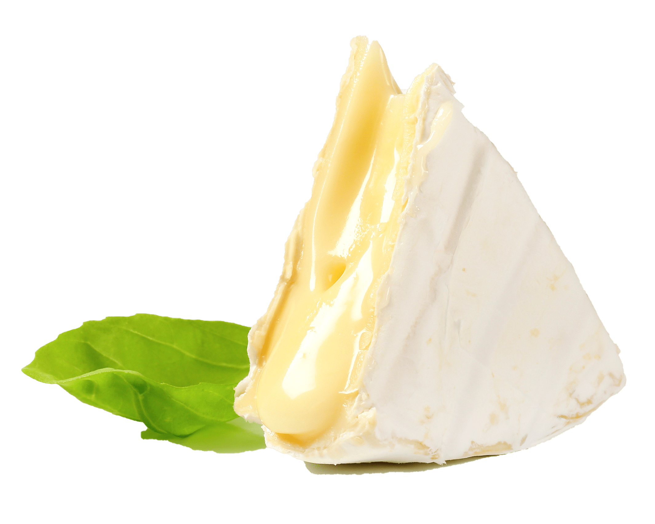 Soft brie cheese with basil leaf